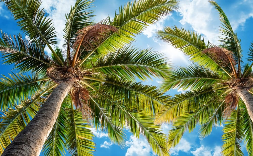 Palm trees swaying against the sky.