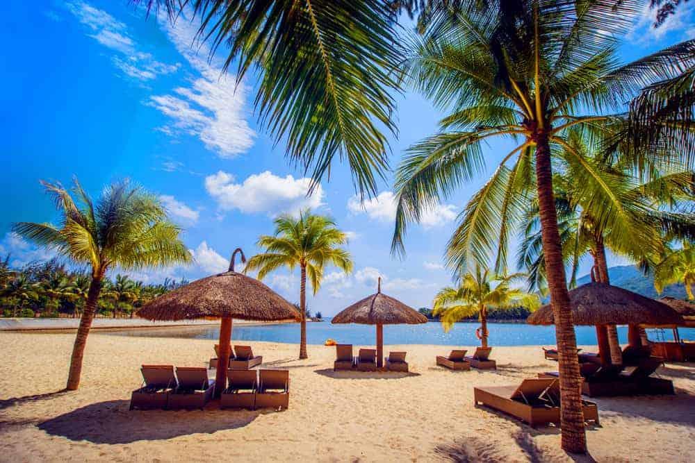 Palm trees on beach in Hawaii