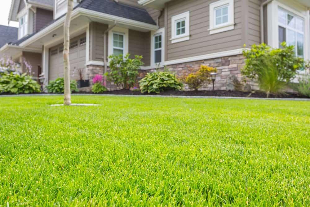 Hybrid Bermuda Grass