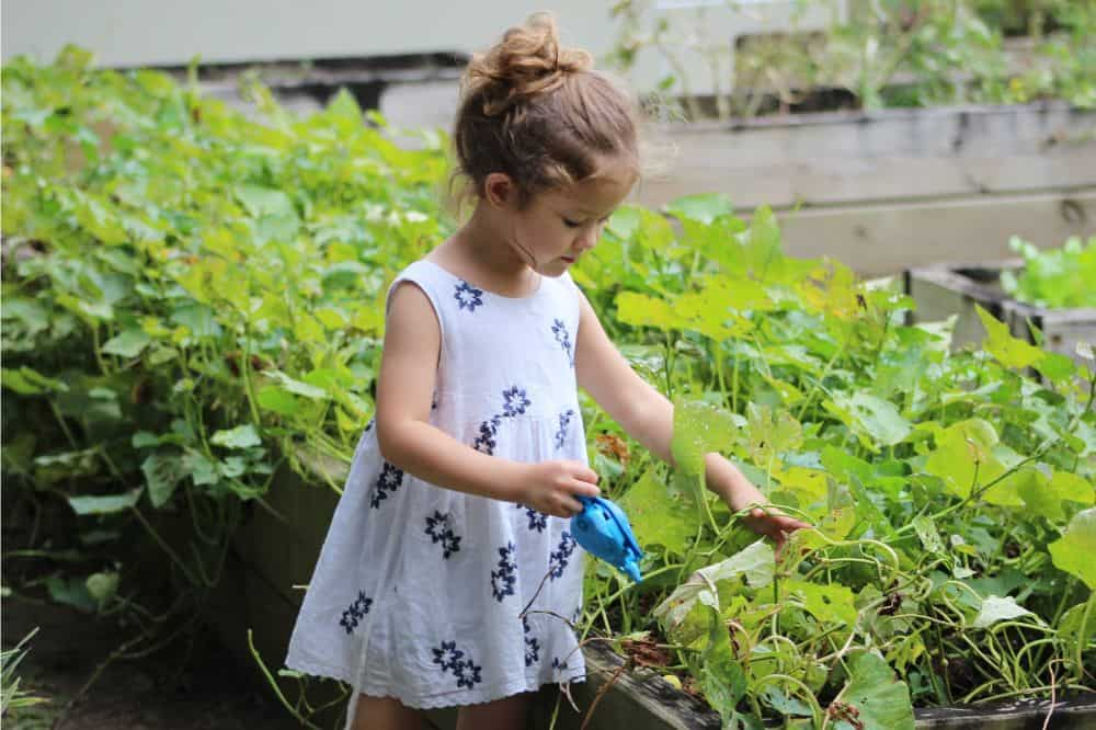Young girl taking care of plants in a raised garden