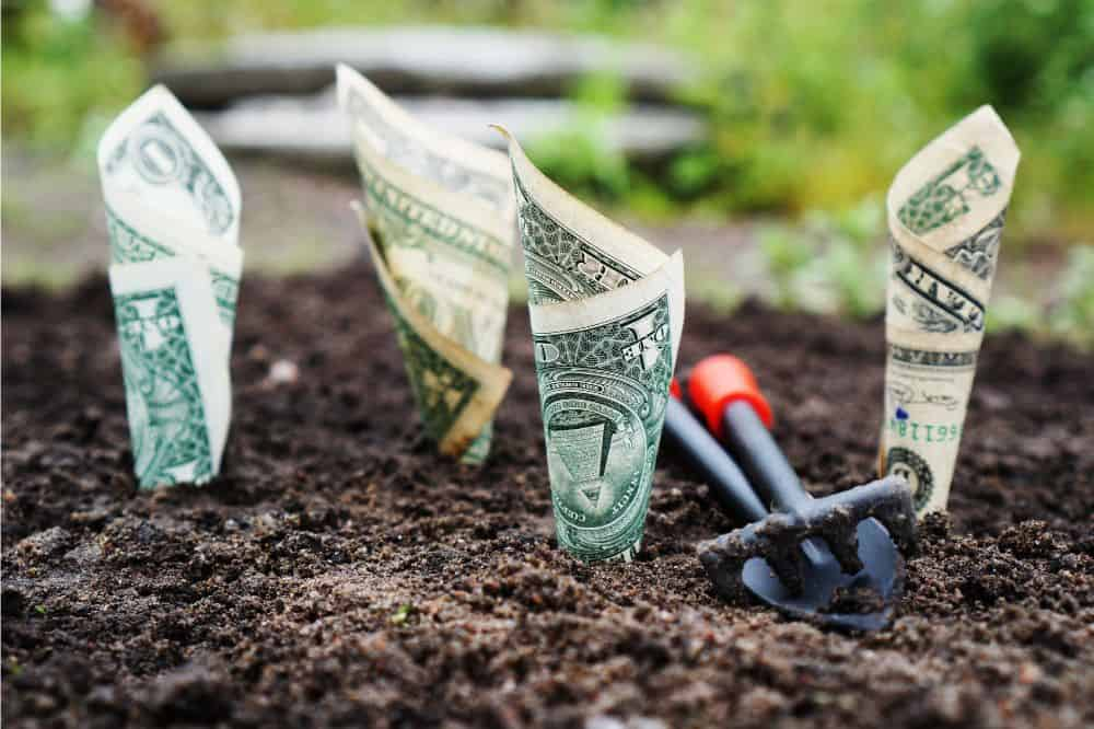 Dollar bills planted in soil