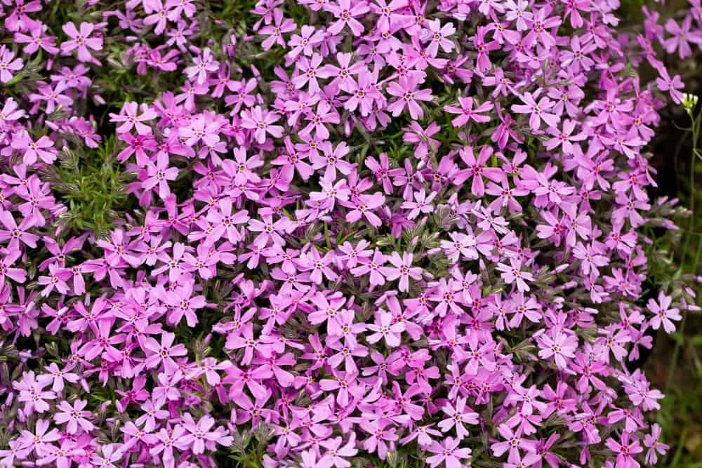 Blanket of stunning flowers