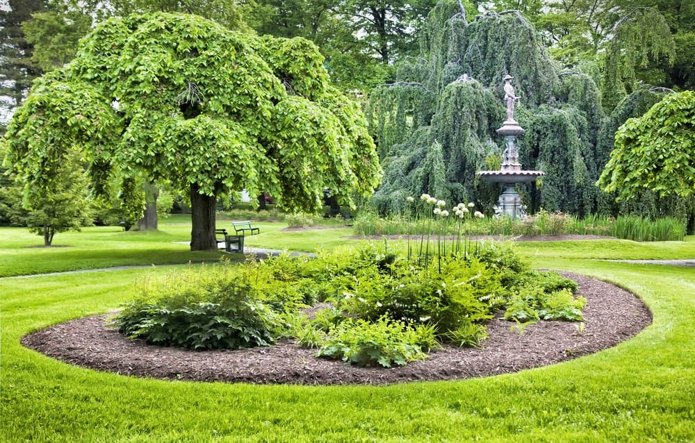 An elm tree in a l garden