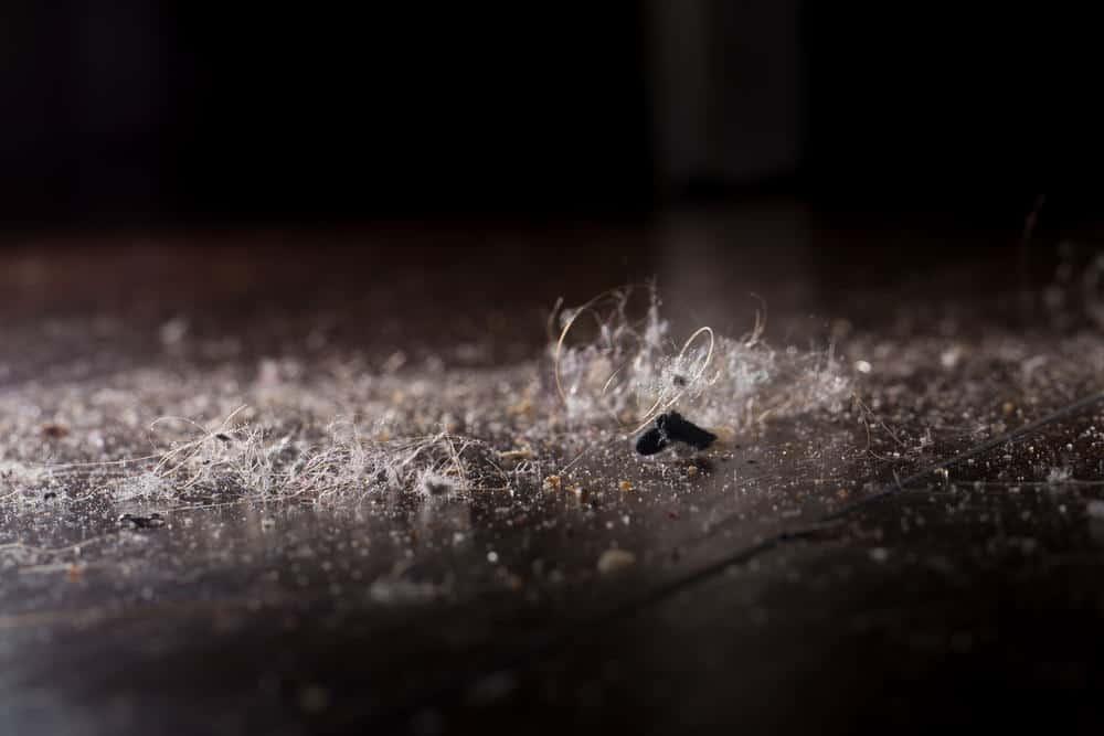 Close up photo of dust on dark hardwood floor
