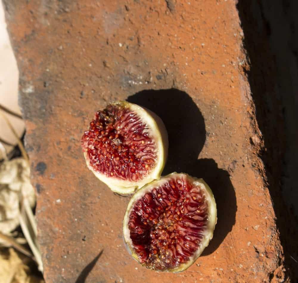 Purple genca figs