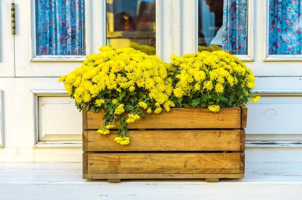 DIY wooden crate planter