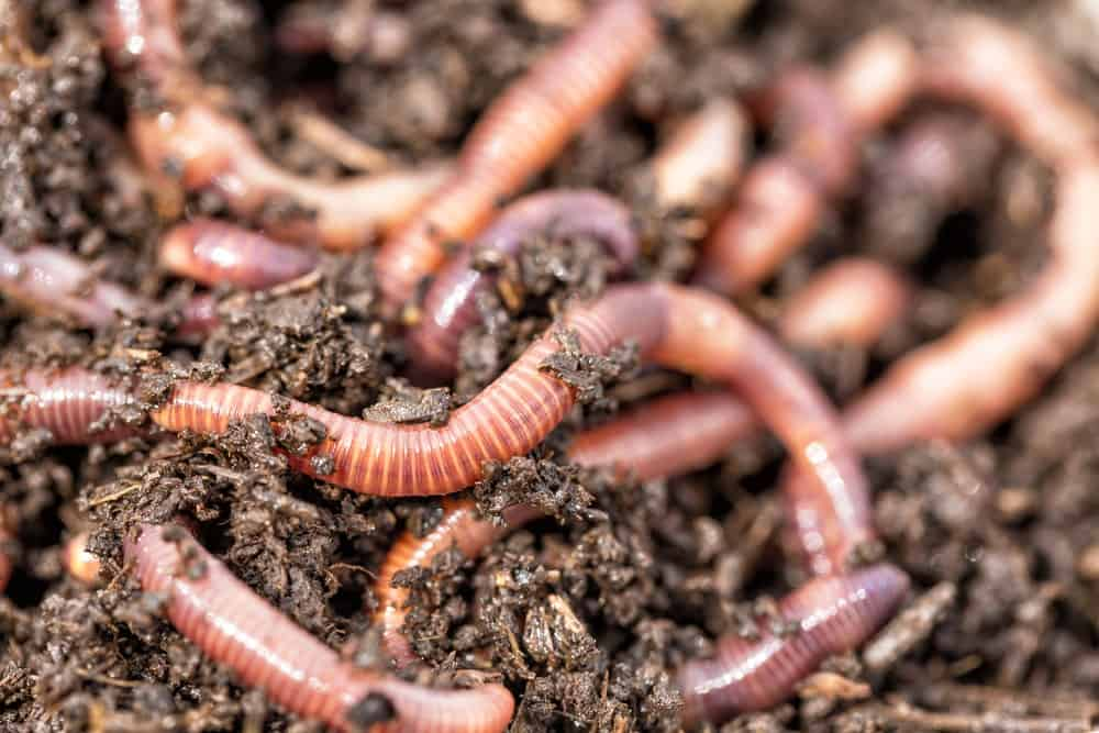 15 Different Types Of Worms