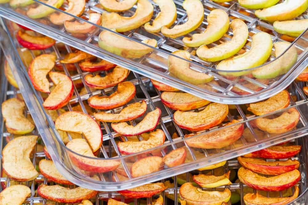 Apple slices on food dehydrator tray.