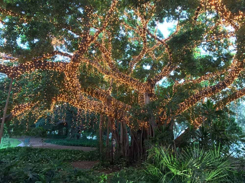 A huge tree wrapped with fairy string lights.