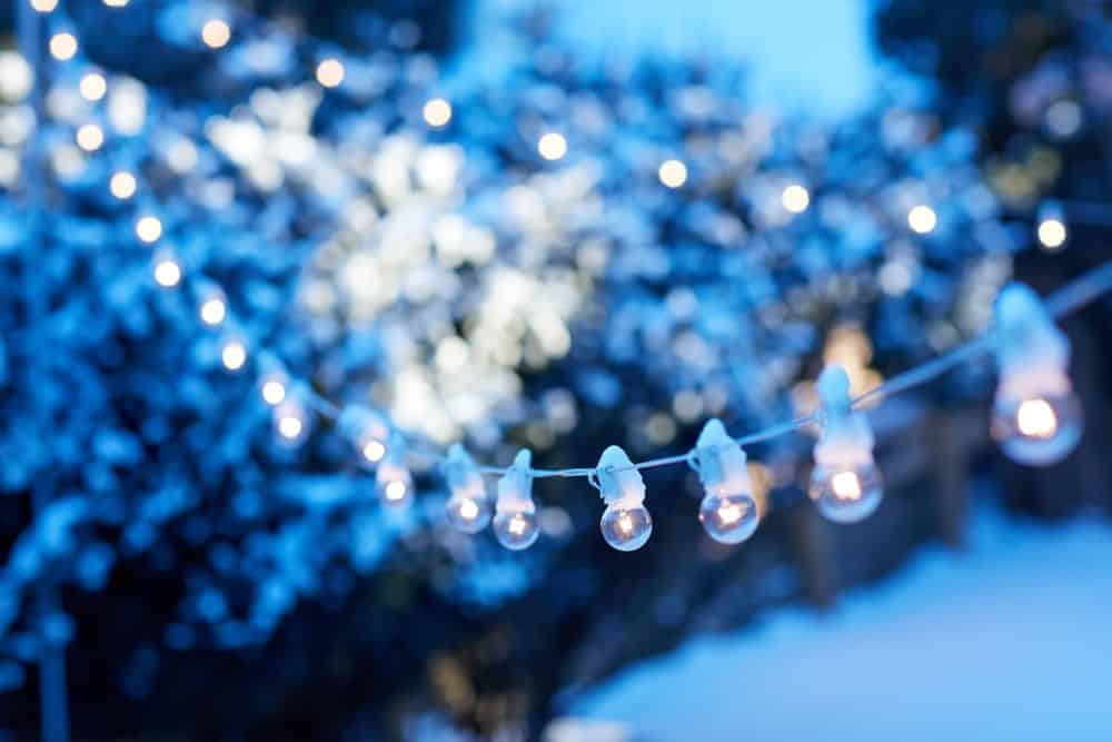 Festoon globe string lights hanging in a winter garden.