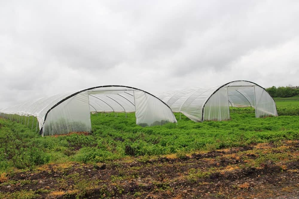 Two greenhouses made of black mesh tarps.