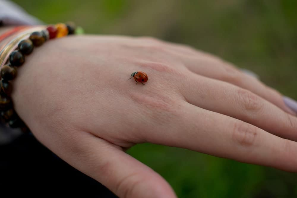 Ladybug sitting on a person's hand.
