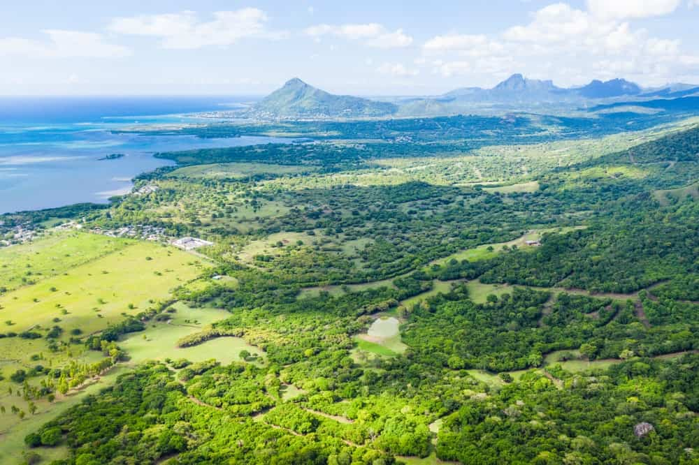 Aerial view of the Mauritius Ebony forest.