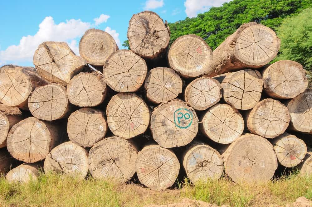 Teakwood logs in Myanmar