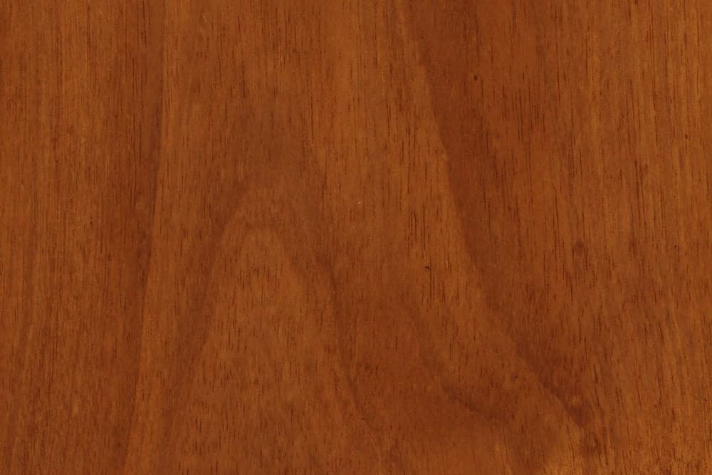 Australian Blackwood, acacia Blackwood, Tasmanian Blackwood