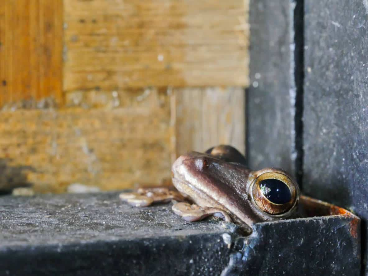 Close up photo of a frog
