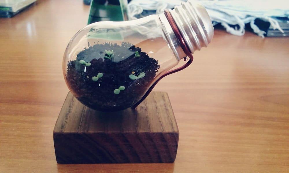Plants growing Inside a Light Bulb