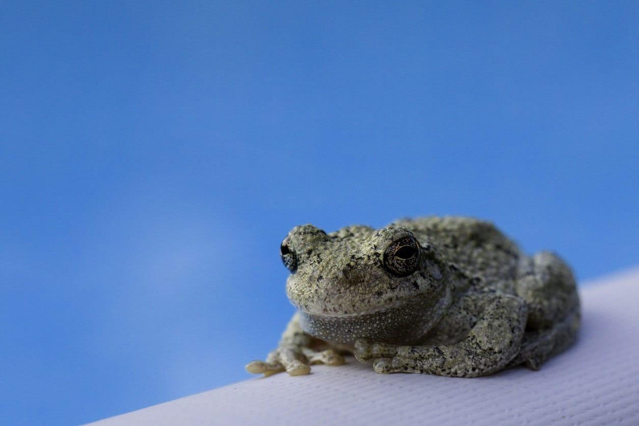 Frog sitting next to a backyard pool