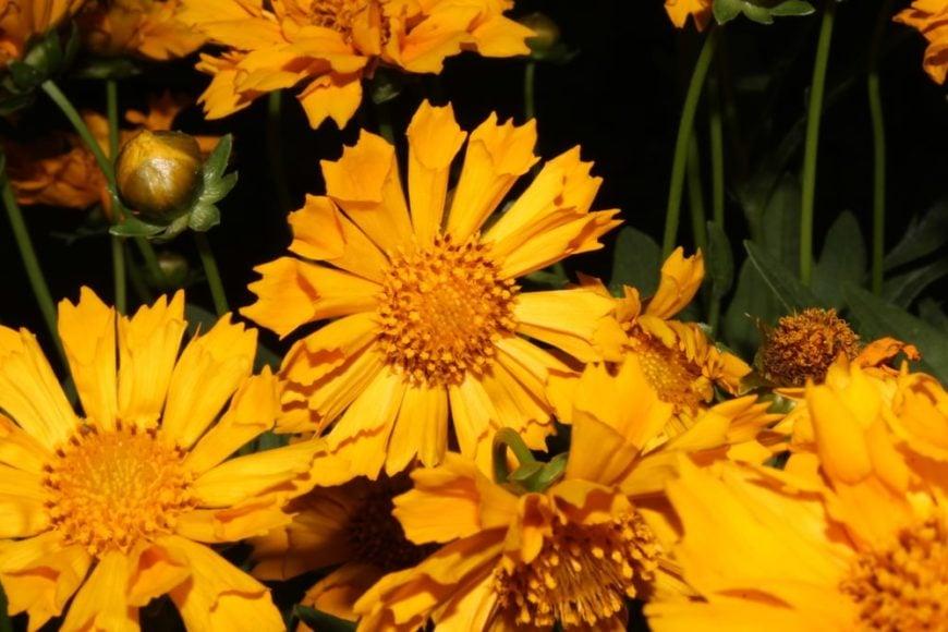 Jethro Tull flowers