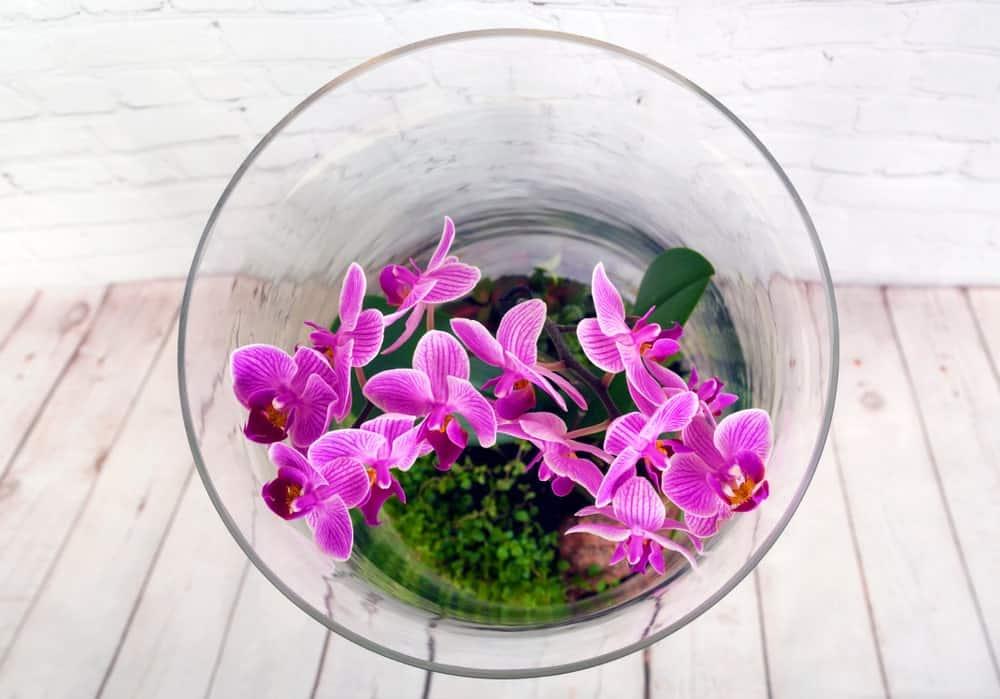 Stunning Glass Orchid Terrarium