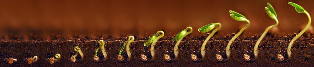 Seedling growth concept