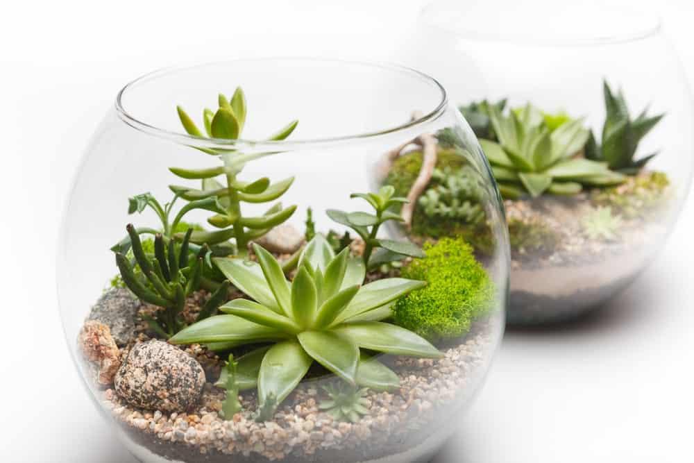 Succulent Terrarium in a Glass Vase