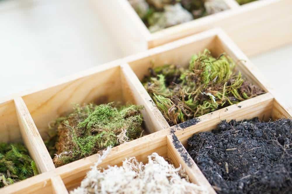 Kit for Growing Mini Garden
