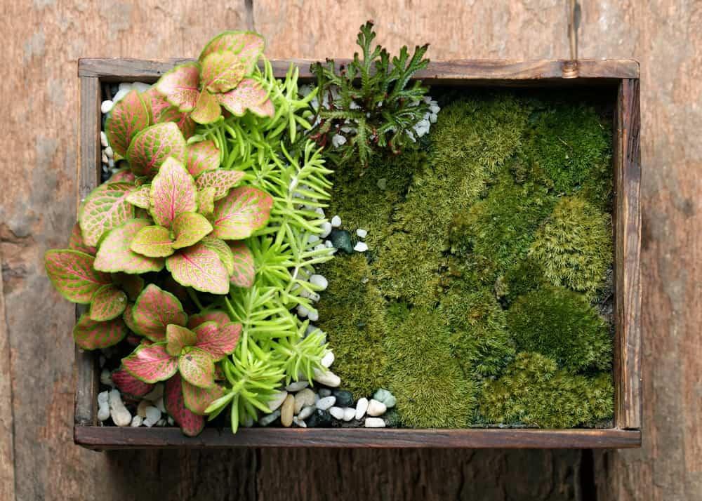 Mini Garden in a Wooden Terrarium