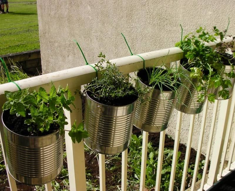 A hanging herb garden in tin cans.