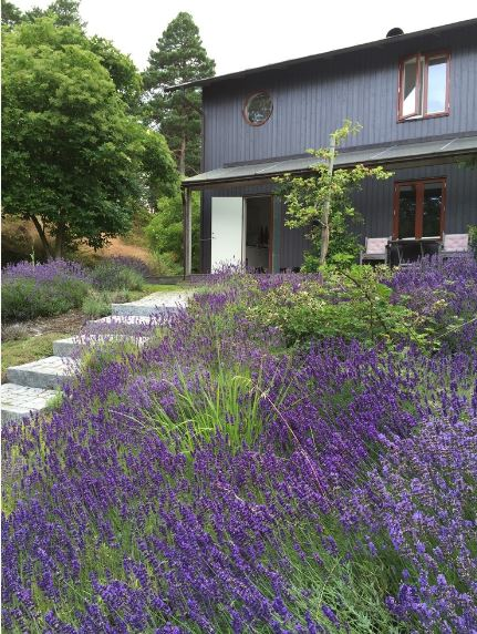 The highlight of this Scandinavian-Style front lawn is clearly the bluish and purplish flowers of the plants left side of the stone steps leading up to the white main door. The subdued gray of the house exterior is also given a life boost by the abundance of colors.