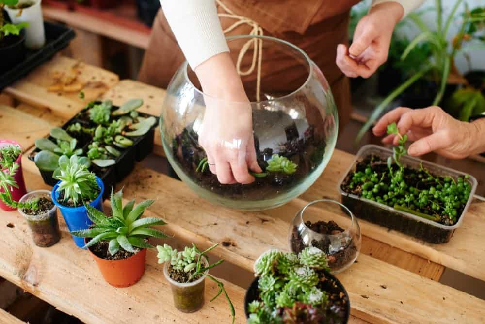 Florist making a terrarium garden.