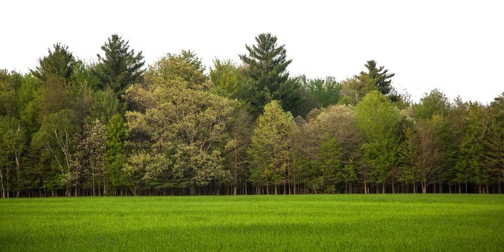 Green scenery with various trees and green grass.