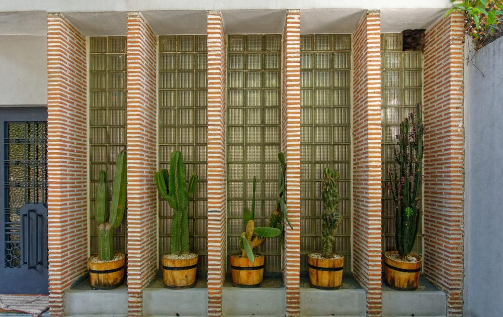 Columnar Cactus