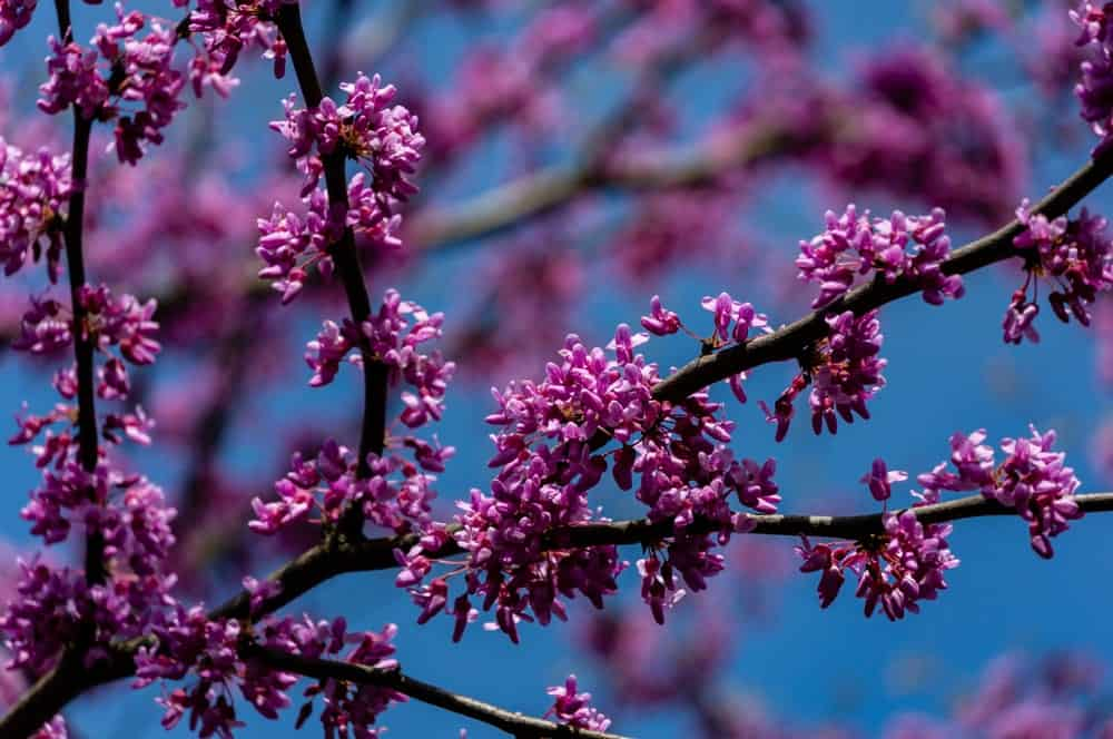 Purple flowers growing on a branch