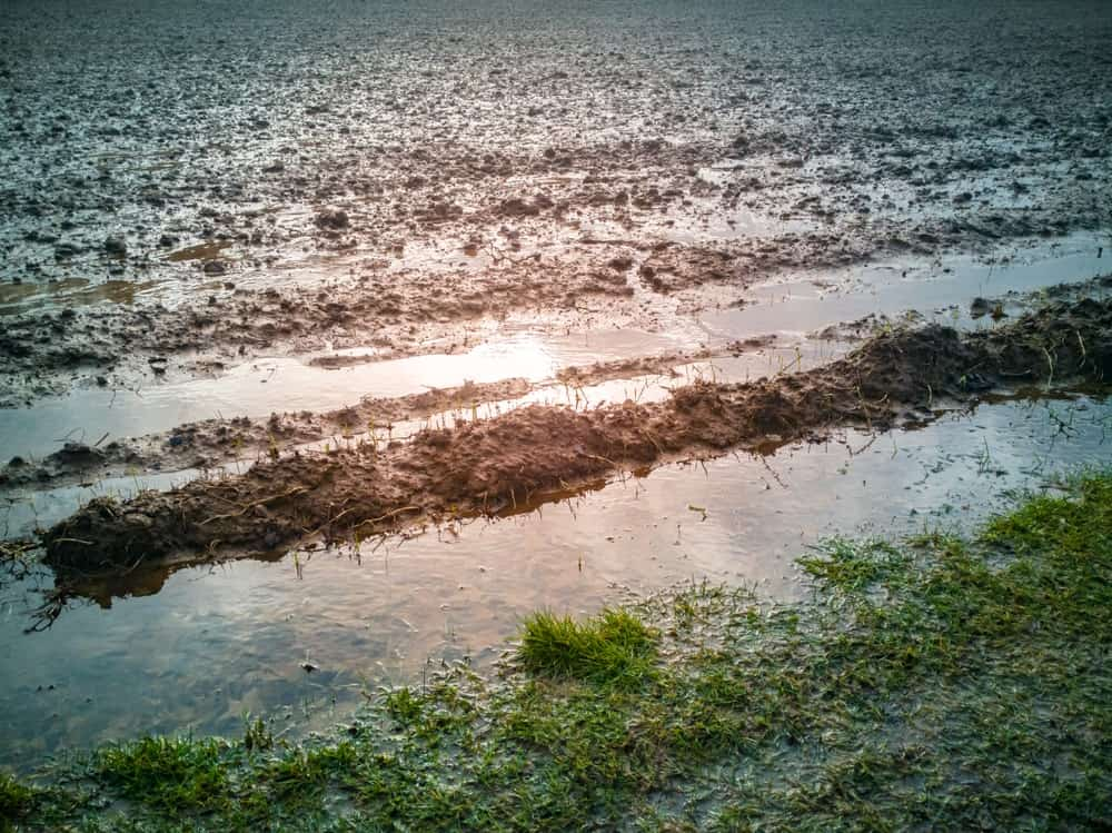 Rainfall on soil