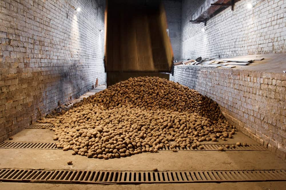Potatoes in a storage warehouse.