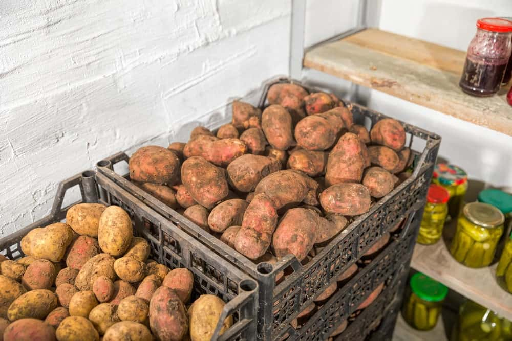 Potatoes stored in a kitchen pantry.