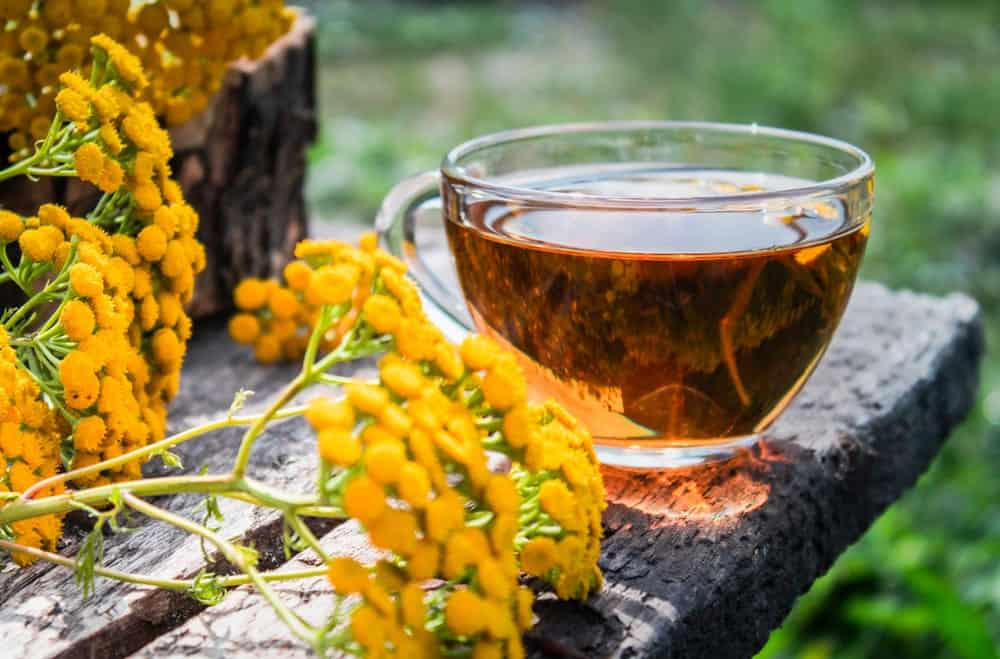 Herbal tea with tansy flowers
