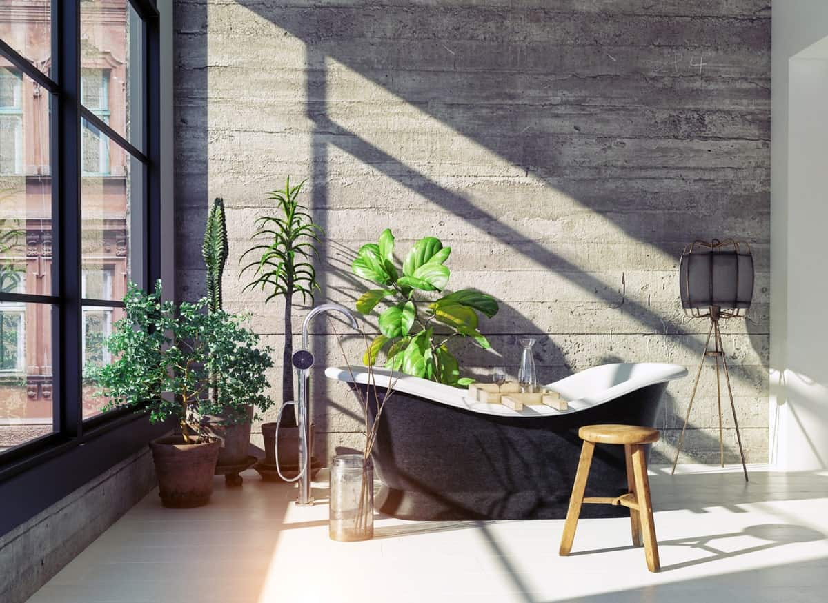 One wall is dominated by large French windows bringing in an abundance of nature light on the adjacent bare concrete wall that is adorned with potted plants by the black freestanding bathtub over a white flooring.