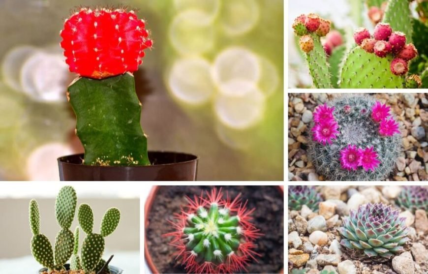 Collage of indoor cactus types and plants