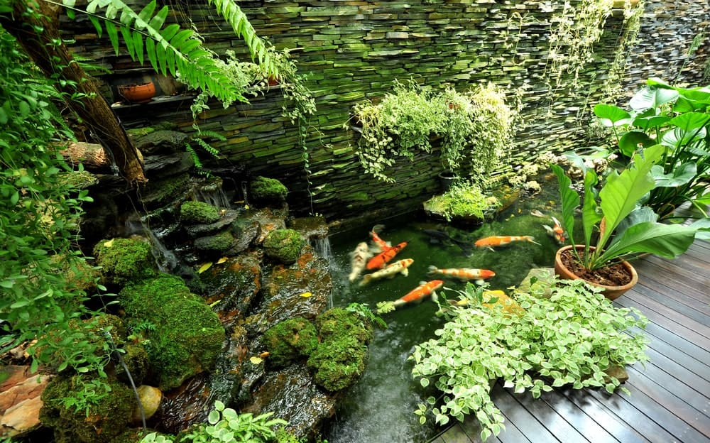 The beautiful and serene Asian-style landscaping that is paired to this wooden walkway is consisted of a koi pond filled with colorful koi fish. This pond is the highlight that is adorned with various potted plants and a lovely arrangement of rocks where water cascades from above.