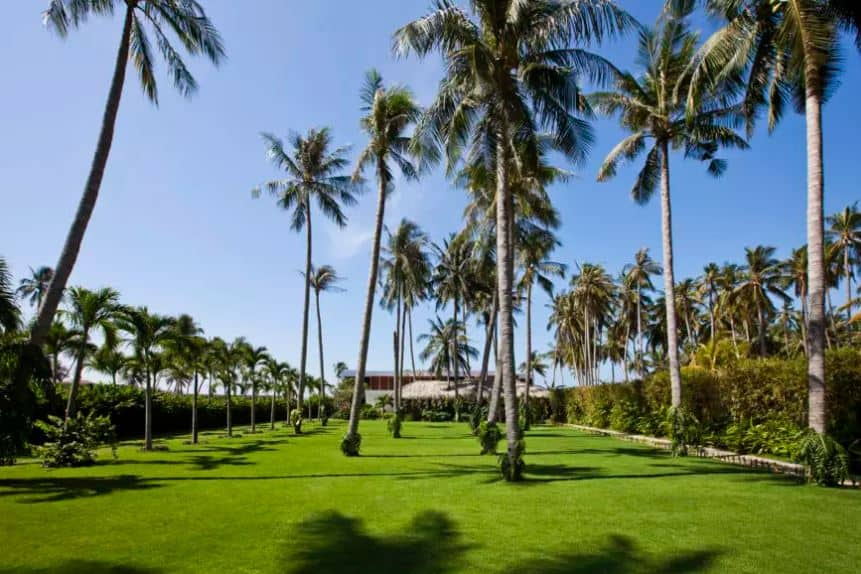 This is a massive backyard that has a fine carpet of well-manicured grass. The highlight here are the amazing palm trees planted in an even spacing creating a lovely tapestry of palm leaf shadows on the grass lawn below that is bordered with tall hedges of shrubs.