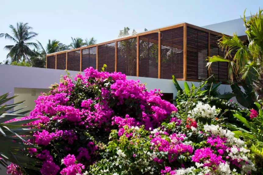 The awesome shuttered wooden walls of the home is a given a colorful contrast of various colorful flowering shrubs that are growing taller than the first level of this home. This is beside the set of tropical trees that cluster along the walls.