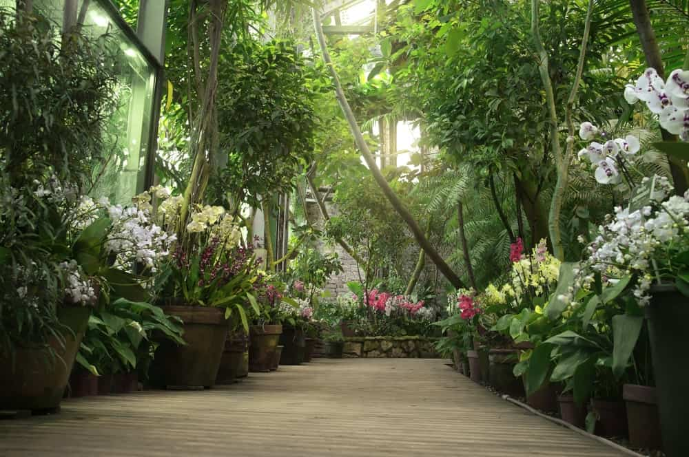 This gorgeous Tropical-style landscape has a worn walkway that is adorned with different and colorful flowering plants on earthy pots. This is topped with tall shrubs and tropical trees creating a tunnel of lush foliage accented with the filtered sunlight cascading down.