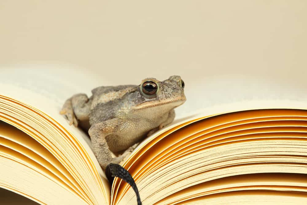 Frog in a book