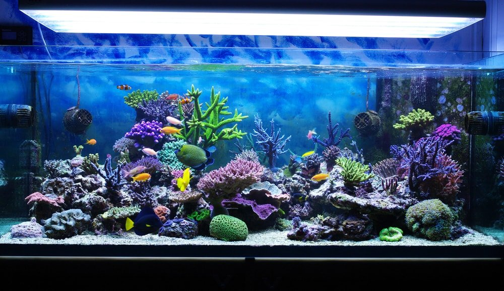 Aquarium with small fishes and coral reef.