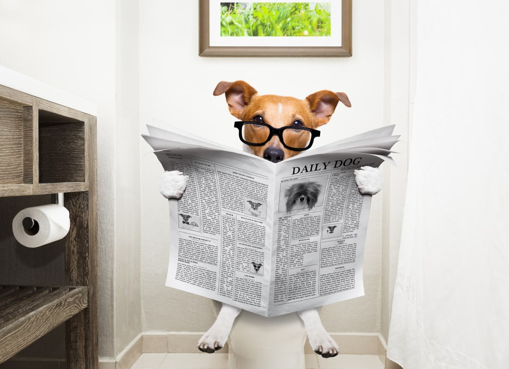 Dog reading newspaper while using the toilet.