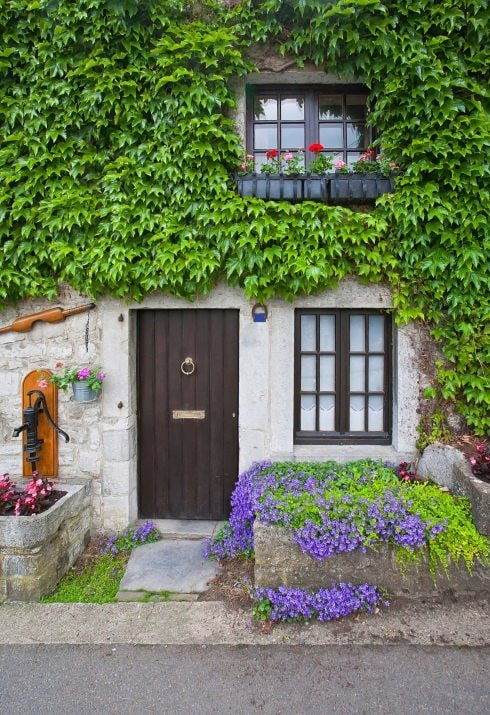 A simple front door in dark wood with an enchanting touch. It showcases a ring knocker and a brass plate along with creeping plants that dominate the upper wall of the house.