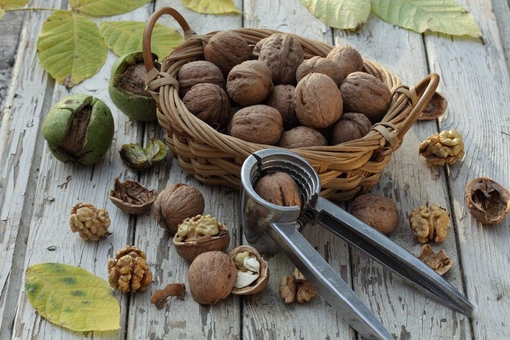 Nutcracker beside a basket of nuts.