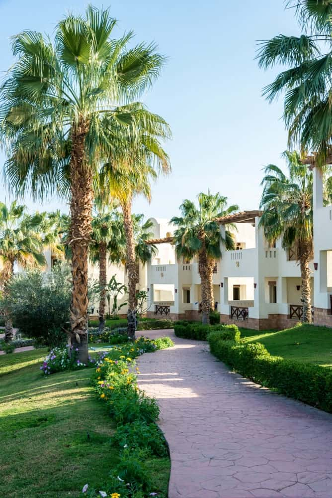 This is a Southwestern-style landscape dominated by the towering palm trees that give accent to the classic white exteriors of the home. Those who are walking through the mosaic stone walkway can enjoy this scenery that is blanketed with grass and bathed with sunlight.